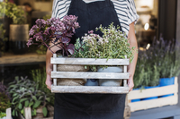 Midsection of florist holding potted plants in flower shop