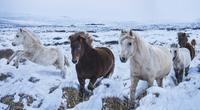 Horses running on snowy landscape against sky