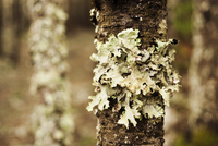 Close-up of lichen growing on tree trunk