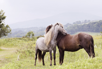 Horses standing on grassy field against sky