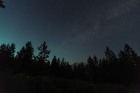 Scenic view of treetop against star field at night