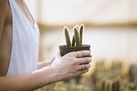 Cropped image of woman holding potted cactus plant 11100043700| 写真素材・ストックフォト・画像・イラスト素材|アマナイメージズ