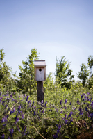Birdhouse on lavender field against clear sky