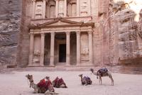 Camels resting in Petra