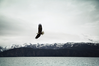 Bald eagle flying over sea against cloudy sky