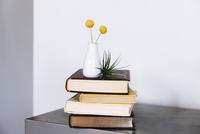 Craspedia flower vase on stacked books against wall
