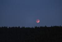 Silhouette trees against clear sky 11100045771| 写真素材・ストックフォト・画像・イラスト素材|アマナイメージズ