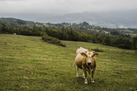 Cow on field against sky