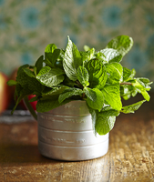Close-up of mint leaf plant on wooden table