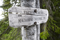 Close-up of Pacific Crest Trail Sign on tree trunk at Mount Hood National Forest