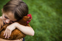 High angle view of cute girl embracing hen at yard
