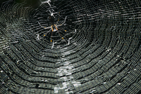 Low angle view of spider weaving web