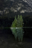 View of trees reflecting in lake against mountain