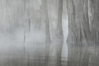 Trees reflecting in lake at forest