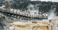 Footbridge against forest in Yellowstone National Park