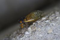 Close-up of cicada on wall