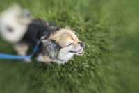 High angle view of dog on grassy field