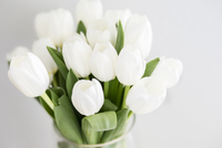 High angle view of tulips in vase against white background