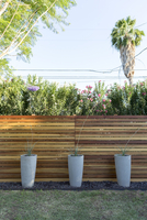 Potted plants against wooden fence in backyard