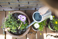 Cropped image of woman watering potted plants against brick wall