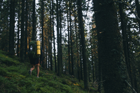 Hiker walking on grassy field amidst trees in forest 11100048806| 写真素材・ストックフォト・画像・イラスト素材|アマナイメージズ