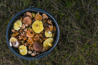Overhead view of fresh mushrooms in bucket on grassy field