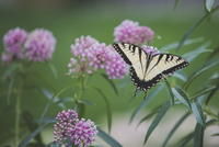 High angle view of papilio machaon on plant