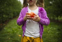 Midsection of girl eating apple while standing in orchard