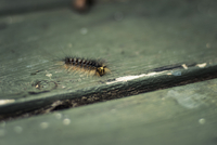 Close-up of caterpillar on wooden table