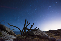 Cactus growing on field by beach against star trail