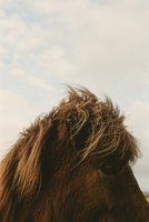 Close-up of horse against cloudy sky
