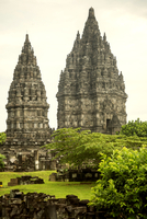 Plants growing at Prambanan temple against clear sky