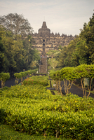 Low angle view of trees growing at Prambanan temple against sky