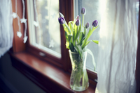 High angle view of purple tulips in vase on window sill
