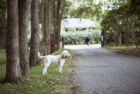 Side view of dog standing on field amidst trees