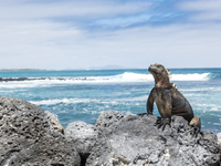 Marine iguana on rock at beach against sky 11100049833| 写真素材・ストックフォト・画像・イラスト素材|アマナイメージズ