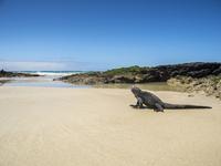 Marine iguana on sand at beach against blue sky