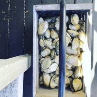Overhead view of clams in box on jetty