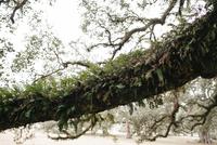 Moss growing tree branch