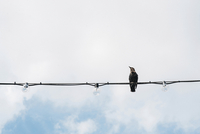 Low angle view of bird perching on cable against cloudy sky