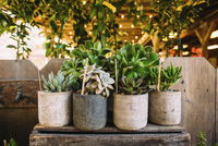 Potted succulent plants arranged on table against wall in backyard