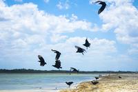 Birds flying over beach against cloudy sky