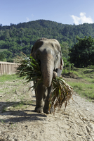 Elephant carrying branch while standing at field on sunny day
