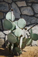High angle view of cactus plant growing on field by wall