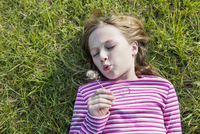 High angle view of cute girl blowing dandelion while lying on grassy field in park 11100053045| 写真素材・ストックフォト・画像・イラスト素材|アマナイメージズ