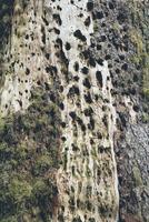 Moss growing on tree trunk at forest 11100053153  写真素材・ストックフォト・画像・イラスト素材 アマナイメージズ