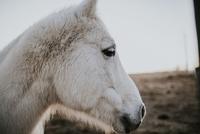 Close-up side view of horse against sky 11100053922  写真素材・ストックフォト・画像・イラスト素材 アマナイメージズ