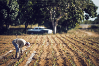 Side view of farmer working on field in farm
