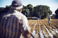 Rear view of farmer looking at coworker standing on field in farm