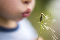 Close-up of boy blowing dandelion 11100054577| 写真素材・ストックフォト・画像・イラスト素材|アマナイメージズ